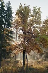 000116400012 (MatveyKarmakov) Tags: nikon nikonf3 kodak 35mmfilm morning film analog filmisnotdead filmphotography filmphoto filmcamera filmlandscape filmcommunity onfilm ishootfilm wood forest folk livefolk