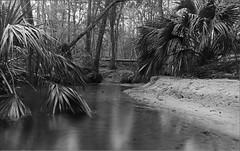 Hogtown Creek in B&W (Jake M. Scott) Tags: hogtown hogtowncreek creek river stream nature jakescott outside natural flowing longexposure gainesville florida landscape landscapes blackandwhite bw