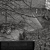 Semaine 3 / Jour 3 (melina1965) Tags: noiretblanc blackandwhite bw îledefrance valdemarne alfortville hiver wintr winter arbre arbres tree trees