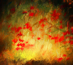 The red leaves (jackaloha2) Tags: leaves red autumn fall abstract colorful artisic impressionism