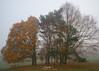 Misty Autumn Morning (Abdulkader Oubari) Tags: misty mist fog foggy nature landscape autumn fall trees tree leaves leaf red yellow nikontop nikonphotography nikon nikond3s naturalbeauty natural naturephotography naturegram wideangle