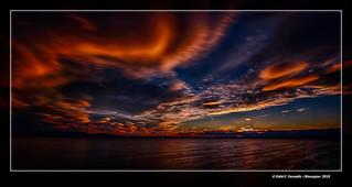 Ocàs a la marjal de Sueca 261 (Sueca's marsh in sunset  261) Sueca, la Ribera Baixa, València, Spain