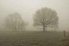 """""""morning blues"""" (B.Graulus) Tags: photography picture photo canon landscape landschap herent flanders belgium belgië belgique trees mist"""