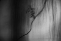 a dream outside the window (reappearance), series (Neko! Neko! Neko!) Tags: blackandwhite blackwhite bw mono monochrome emotion feeling dreams memories subconsciousness surreal surrealism expression expressionism