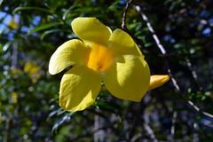 WOL Calauan Laguna Philippines Day 6 (217) (Beadmanhere) Tags: philippines flowers