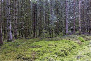 Deep Dark Wood_G5A6632