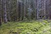 Deep Dark Wood_G5A6632 (ronniefleming@btinternet.com) Tags: woodland forestry forest scotland scottishfield perthshire strathearn perthkinross clouds sky landscape fields visitscotland walkhighlands scottishlandscapes scottishwoodland moss undergrowth