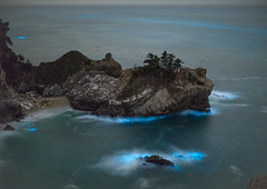 Bioluminescent Seas (KingXII) Tags: water phytoplankton 50mm pacific bioluminescent ocean dinoflagellates pacificocean fotodiox bigsur ilc sony canon mcway a7r2 juliapfeifferburnsstatepark