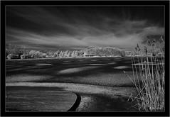 Zeiss Batis 2/25mm on Sony A7R-IR (720nm) (Dierk Topp) Tags: a7r bw ice ilce7r ir macro sonya7rir tse zeissbatis225mm canon herrenteich infrared monochrom sw sony tiltshift winter wood reinfeld