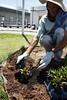 SAUDE Jardin Hospital 03 01 18 Foto Celso Peixoto (25) (prefbc) Tags: jardinagem hospital ruth cardoso saúde