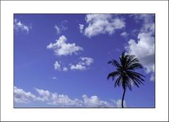Fier (Panafloma) Tags: 2018 caraïbes catégorieprojet cielmétéo couleurs croisièrecosta famille géographie martinique nadine nadinebauduin natureetpaysages personnes vacances voyage végétaux arbre couleur croisière nuages palmier soleil france fr
