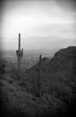 (28.dans.later) Tags: holga135bc kodaktmax400 bw monochrome saguaro desert southmountain phoenix arizona
