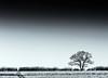 oxford-1-240218 (Snowpetrel Photography) Tags: kidlington olympusem1 olympusm40150mmf28 oxfordshire blackandwhite countryside emptiness landscape monochrome winter hamptongay england unitedkingdom