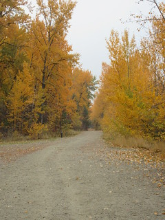 The Greenway in its Fall colours