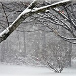 Photo#13-The Backyard-HCS! thumbnail