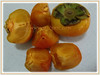 Fruits of Diospyros kaki (jayjayc) Tags: flickr18 jaycjayc malaysia kualalumpur diospyroskaki asianpersimmon japanesepersimmon orientalpersimmon buahpisangkakiinmalay floweringplants orange