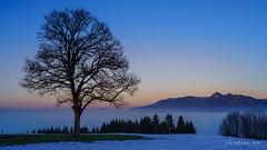 L'arbre au-dessus du brouillard (Switzerland) (christian.rey) Tags: brouillard sunset coucherdesoleil arbre tree gruyère fribourg baum paysage landscape sony alpha a7r2 a7rii 1635 swiss mountains hiver winter préalpes