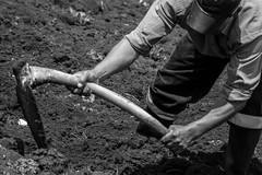 02 (Lechuza Fotografica) Tags: verde cajamarca peruvian farmers agricultores