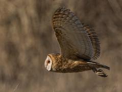 ND5_7035 Barn Owl Talons (Wayne Duke 76) Tags: talons bird raptor barnowl