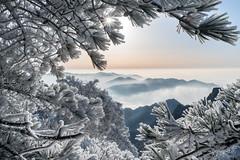 """雪凇 Snow Yuki  II 黃山-Huangshan-China 喜欢寻一处清幽,静静地融入大自然,松柳凝霜贵雪,戴玉披银,朵朵白云,排排雪浪,十分壮观。这就是被人们称为""""雾凇"""" (CK NG (choookia)) Tags: 雪凇 snowyuki 黃山 huangshan china 喜欢寻一处清幽静静地融入大自然 松柳凝霜贵雪戴玉披银朵朵白云排排雪浪十分壮观。这就是被人们称为""""雾凇"""" landscape trip sunset sunrise winter snow tree sonya9 sonyfe24240mm"""