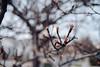 ILCE-7M2-09958-20180116-1245 // Vivitar MC Close Focus Wide Angle 28mm 1:2 (Otattemita) Tags: 28mmf20 florafauna vivitar vivitarkomine vivitarmcclosefocuswideangle28mmf20 fauna flora flower nature plant wildlife vivitarmcclosefocuswideangle28mm12 sony sonyilce7m2 ilce7m2 28mm cnaturalbnatural ota