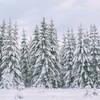 ~ still winter ~  Riddarhyttan, Sweden (Tankartartid) Tags: himmel sky blåhimmel bluesky snow granar gran snö träd firs fir trees natur nature vinter winter norden nordic västmanland riddarhyttan europe sverige sweden instagram ifttt
