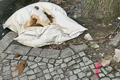 Neukölln (österreich_ungern) Tags: f658 berlin neukölln kot kacke hundekot dsm 3024 deutschland capitol city kissen pavement trottoir gehweg dirt dog shit crap 44 tristesse decay aficionado kotaficionados hauptstadt koprophilie