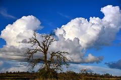 "ButteCreekCanyon_02 (DonBantumPhotography.com) Tags: landscapes nature sky clouds grasses trees canyon ""donbantumphotographycom"" ""donbantumcom"" ""nikon d800"" afs nikkor 28300mm 13556g ed vr"""
