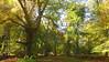 New Forest NP, Hampshire, England (east med wanderer) Tags: england hampshire uk newforestnationalpark trees forest woodland beech holly oak markashwood lyndhurst