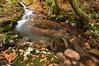 El ojo del Otoño . (Emilio Rico Uhia) Tags: calendario ojo otoño agua ocres remolinos emilioricouhia portonovo ribadumia galicia sedas