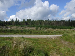 Fernworthy Forest, Dartmoor - regrowing clear-felled area (Philip_Goddard) Tags: europe unitedkingdom britain british britishisles greatbritain uk england southwestengland devon dartmoornationalpark dartmoor fernworthyforest clearfelled regrowing