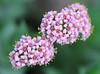 Flowers (LuckyMeyer) Tags: makro botanical garden pink rosa yellow green flower fleur plant blüte