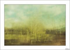 Revoltijo de emociones (V- strom) Tags: concepto concept árbol tree paisaje landscape azul blue nubes clouds bosque forest amarillo yelow ideas nikon nikon2470 nikond700 hierba campo grass countryside texturas textures luz light suelo cielo sky soil vstrom
