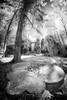 perdu dans le Pas-de-Calais (jeje62) Tags: irshoot ir720 canon digitalinfrared fisheye infrared infrared715nm infrarouge samyang samyang8mm blackandwhite noiretblanc bw