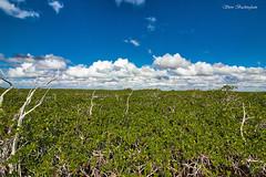 Mangrove Prairie (sbuckinghamnj) Tags: everglades evergladesnationalpark florida landscape
