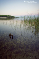 Lac d'Hourtin (Matthieu Berroneau) Tags: habitat milieu paysage landascape spot france nature habita wildlife gardatxoa lebensraum lac étang hourtin gironde 33 couleuvre vipérine natrix maura