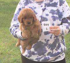 Sophie Boy 1 2-18