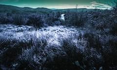 Mallefougasse purple014 (Patrick.Raymond (4M views)) Tags: 04 hiver froid neige alpes de haute provence mallefougasse pinède argentique lomography purple chrome violet nikon