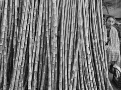 (shadowplay) Tags: sugarcane market oaxaca mexico