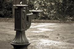 Watering hole. (ogdaddyo) Tags: