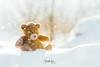 Winter bokeh (mirri_inc) Tags: bokeh snow teddy winter calm mood sleepy sun light white outdoor