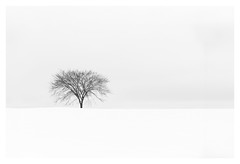 Grace (bprice0715) Tags: canon canoneos5dmarkiii canon5dmarkiii landscape landscapephotography nature naturephotography beautiful beauty beautyinnature blackandwhite blackwhite bw monochrome mono tree snow snowylandscape winter highkey white minimalist minimalism minimal elegant graceful