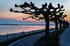 Silhouette (Lucille-bs) Tags: europe germany allemagne badewurtemberg hagnau bodensee lacdeconstance crépuscule coucherdesoleil couleur arbre silhouette route sunset eau lac banc