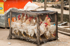 Waiting chickens (10b travelling / Carsten ten Brink) Tags: 10btravelling 2017 abidjan africa africaine african afrika afrique carstentenbrink cotedivoire elfenbeinkueste grandbassam gulfofguinea iptcbasic ivorian ivorycoast westafrica africain birds cage cmtb hens ivoirien ivoirienne roosters tenbrink