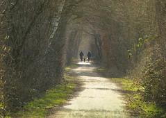 Biking the dogs (joeke pieters) Tags: 1380455 panasonicdmcfz150 burlo duitsland deutschland germany fietsers bikers honden dogs landschap landscape landschaft paysage pad zandpad dirtroad path