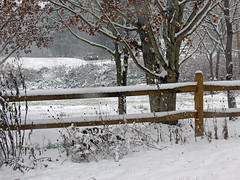 First Snow of the Winter (BlueRidgeKitties) Tags: canonpowershotsx40hs snow