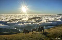 En el Edén (Jabi Artaraz) Tags: jabiartaraz jartaraz zb euskoflickr horses yeguas pottokas potrillos nature naturaleza