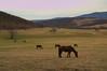 Mountain horses (dobrinstamov) Tags: horse horses grazing jeravna bulgaria