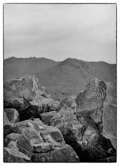 Saguaro National Park (G. Christopher Klug) Tags: arizona hp5 petroglyph rodinal saguaro tucson