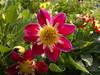 2017-08-22-10505 (vale 83) Tags: flower nokia n8 coloursplosion colourartaward friends